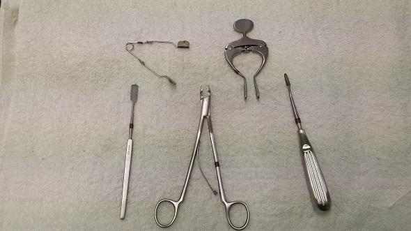 Guinea Pig Dental Equipment